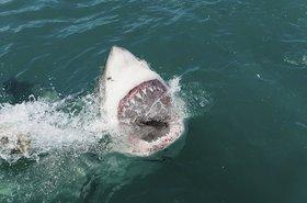 Shark sinks its teeth into technology