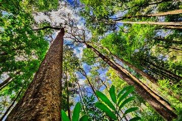 amazon rainforest trees thinkstock photos khlongwangchao