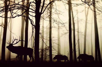 Animals_forest_Anja_Pixabay_March 2021_small.jpg