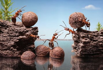 ants teamwork microservices bugs thinkstock photos antrey