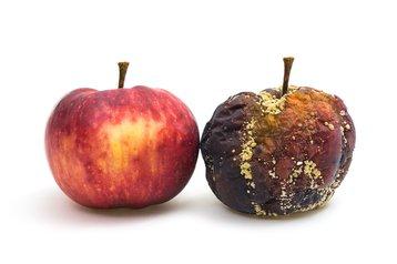 apple rotten fresh thinkstock photos jens gade 492941862