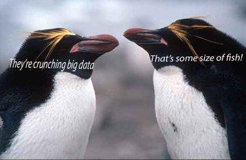 big data fish