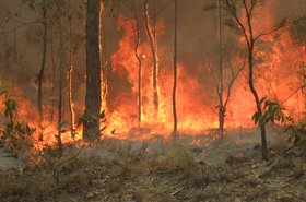 Bush_fire_at_Captain_Creek_central_Queensland_Australia..jpg