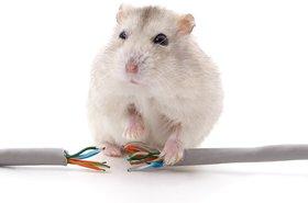 Mouse versus Internet