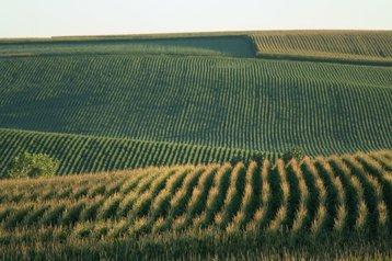 nebraska cornfields thinkstock photos carbon brain
