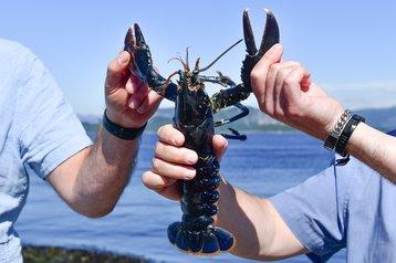 Plate Sized Lobster green mountain.jpg