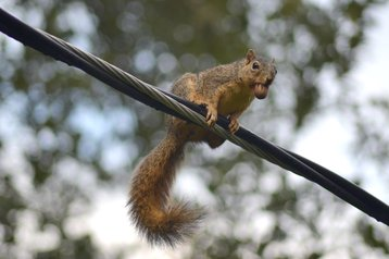 Squirrel - the scourge of data centers