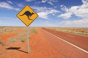 Australia Kangaroo road