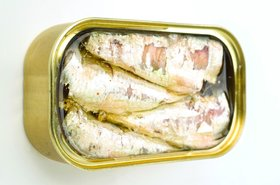 A can of sardines