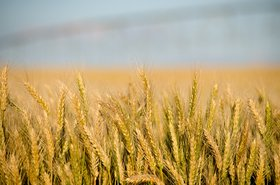 A field somewhere in Oregon