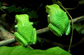 thinkstock photos green frog