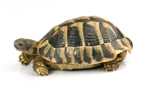 tortoise color thinkstock