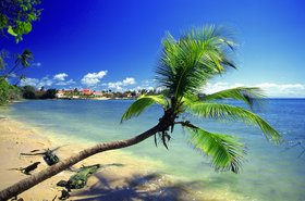 trinidad palm beach