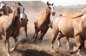 Wild horses. By Annaleyah, Pixabay