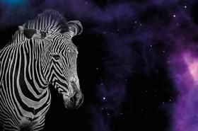 Zebra in Space