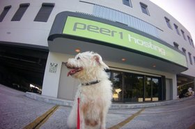 a four legged trip to our miami datacenter cogeco peer 1