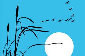 azure migration lead