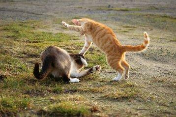 cat-1184781_1920.jpg