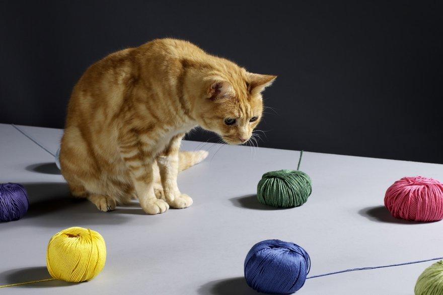 cat yarn open source