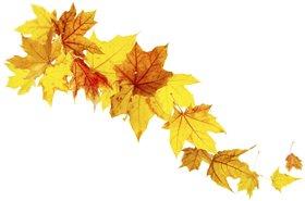 leaves autumn fall thinkstock lead