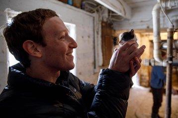 mark zuckerberg kitten.jpg