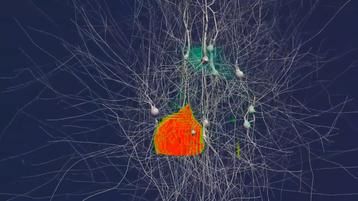 A 100 neuron simulaton