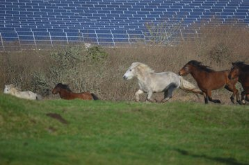 Solar panels and horses