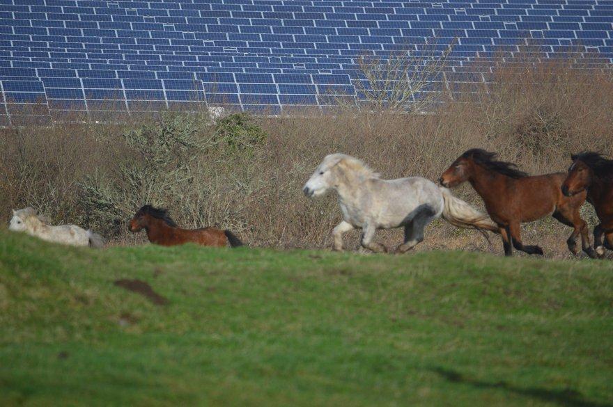 Solar panels and horses