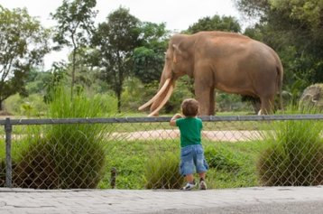 zoo elephant thinkstock microgen